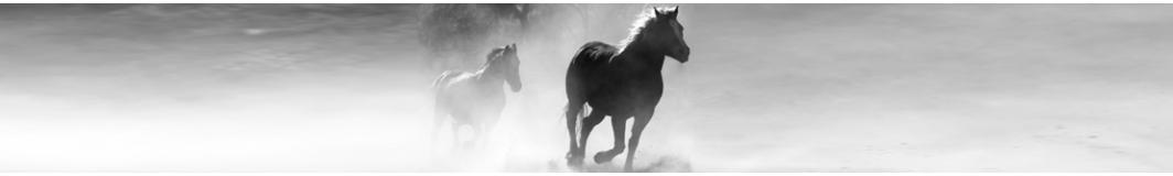 Rewriting Equestrian History